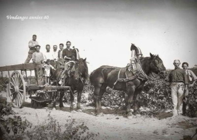 Attelage pour le transport des comportes avec 2 chevaux