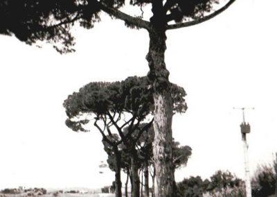 Chemin du Cap de Fouste